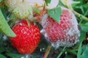 Борьба с вредителями сада. Защита растений от вредителей