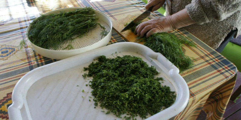 Cutting dill for blanks