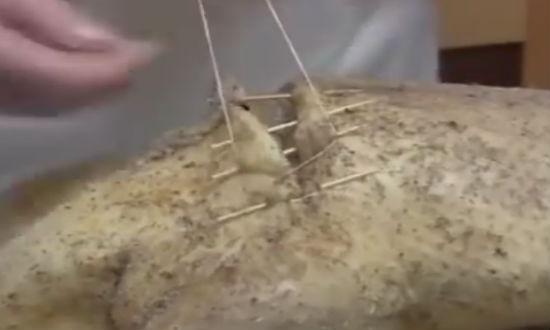 зашиваем гуся