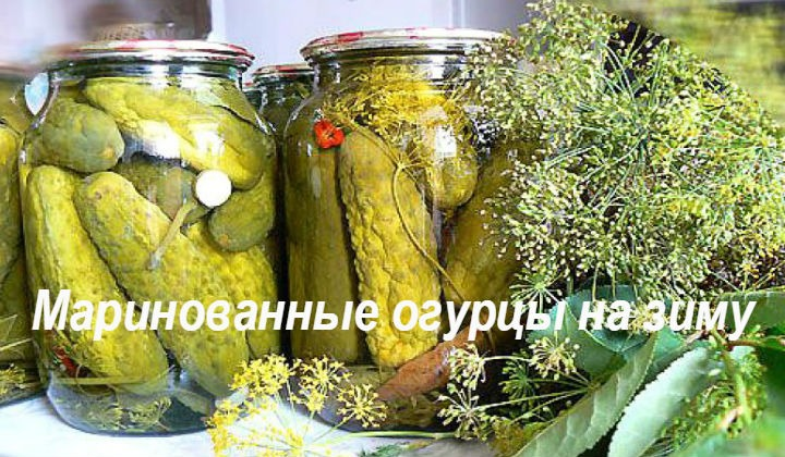 Вкусные хрустящие маринованные огурцы на зиму