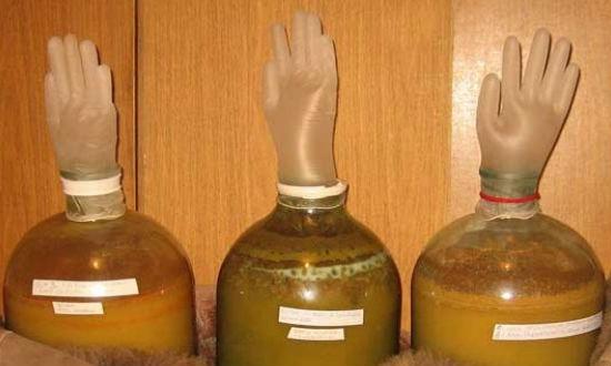 Wine fermentation