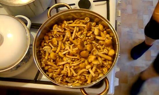 Варим грибы 3 минуты