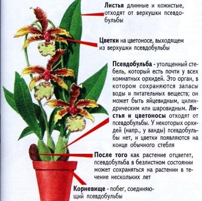 части цветка