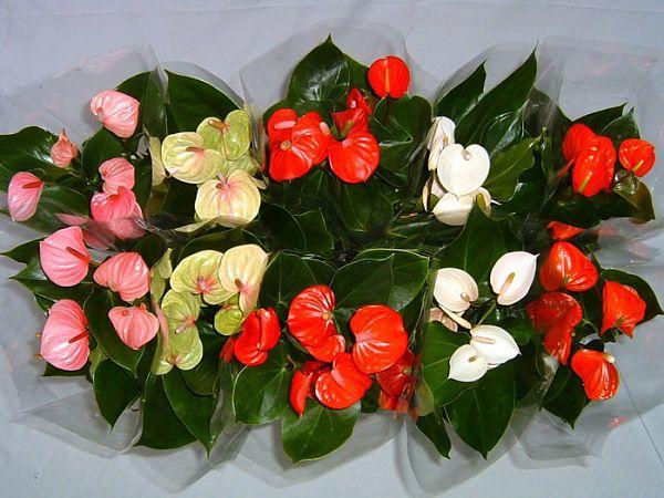 Цветы разных тонов