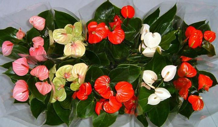Цветок Женское счастье