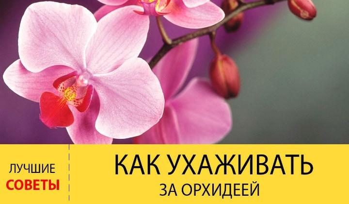Как ухаживать за орхидеями в горшке в домашних условиях, советы для начинающих