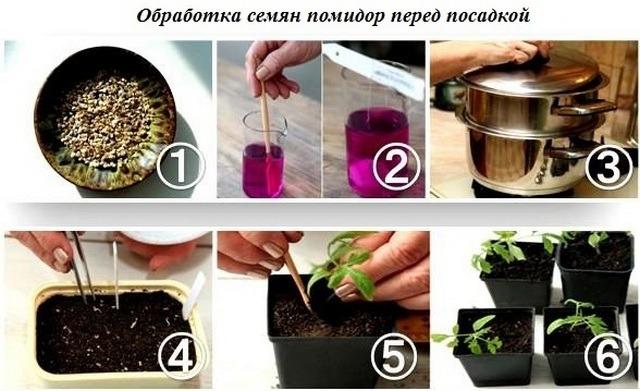 Как сажать помидоры на рассаду в домашних условиях. Когда сеять томаты и высаживать рассаду по лунному календарю 2018 года