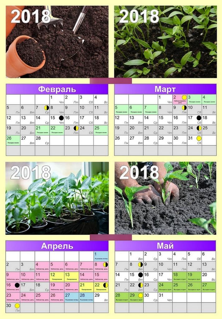 Календарь посадки перцев на рассаду