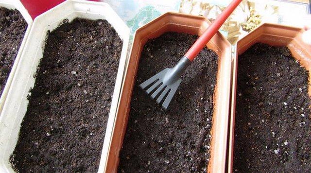 Подготовка земли для рассады