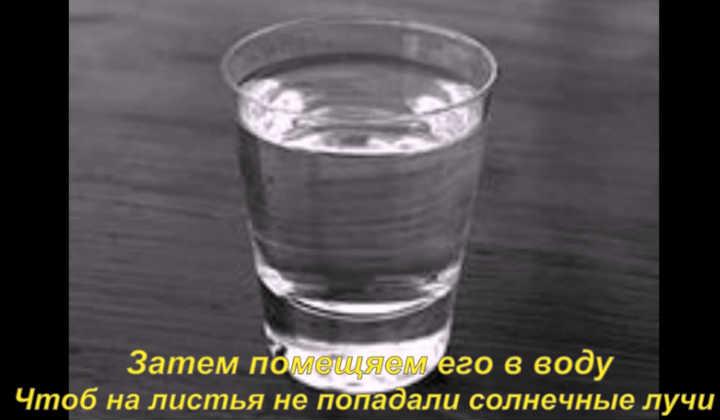 Вода для черенкования