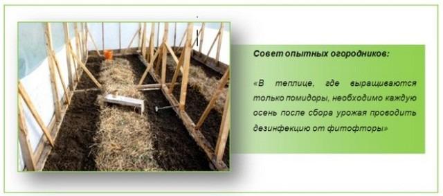 Выращивание помидор в теплице, посадка и уход, пасынкование