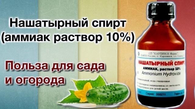 Нашатырный спирт против бородавок - Afishaclub.ru