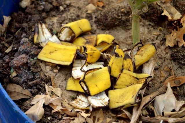 Подкормка растений минеральными и органическими удобрениями