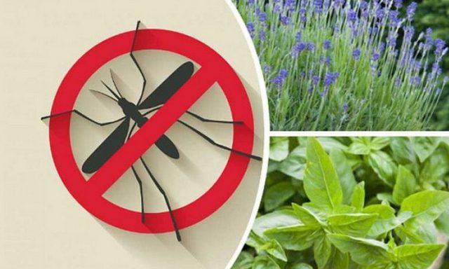 How to get rid of mosquitoes in the apartment, in nature - the best effective means