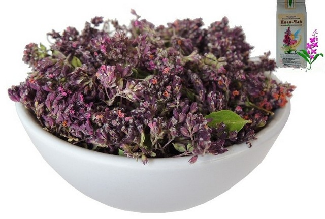 Oregano - beneficial properties and contraindications for women, men and children