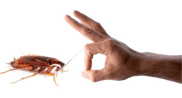 уничтожить таракана