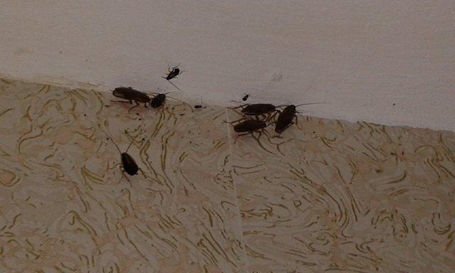 место скопления тараканов