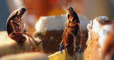 Как избавиться от тараканов в домашних условиях народными средствами