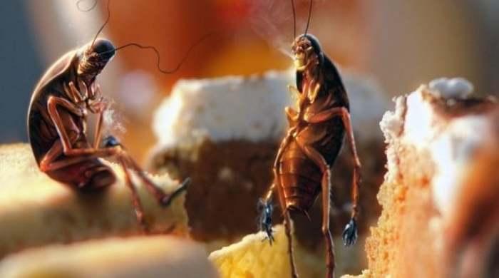 Тараканы - борьба