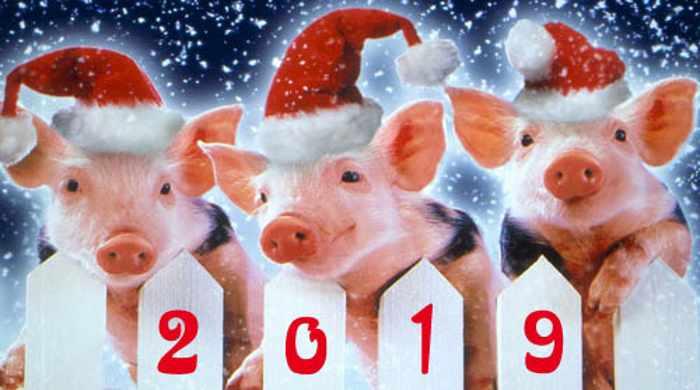Новый год свиньи