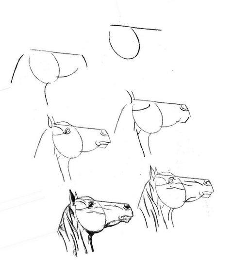 портрет лошади