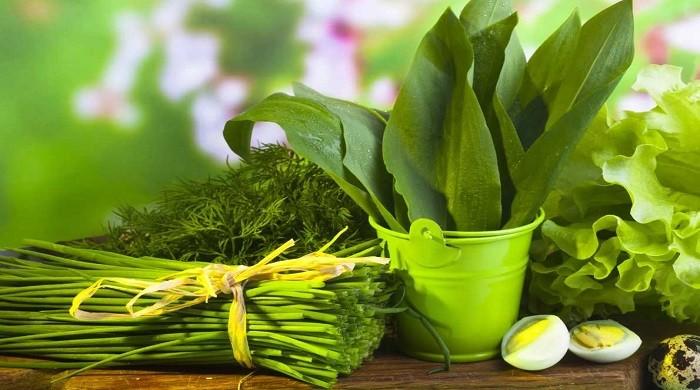 Черемша, что это за растение — польза и вред, как вырастить и приготовить