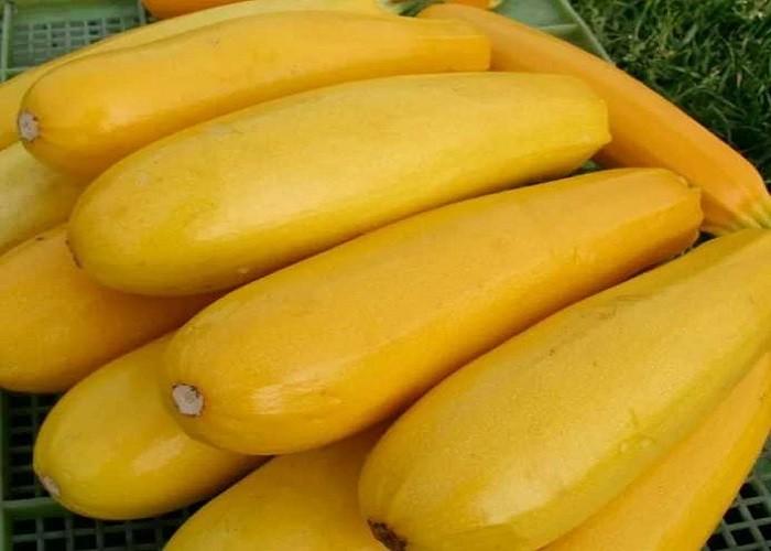 желтоплодные