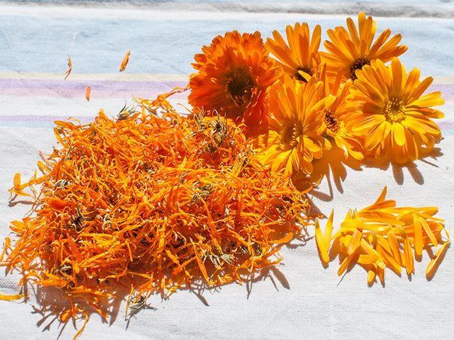 календула и семяна