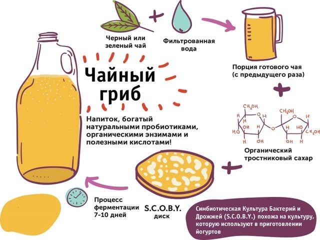 схема производства грибом напитка
