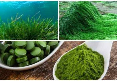 Спирулина, что это, её полезные свойства и противопоказания применения для организма