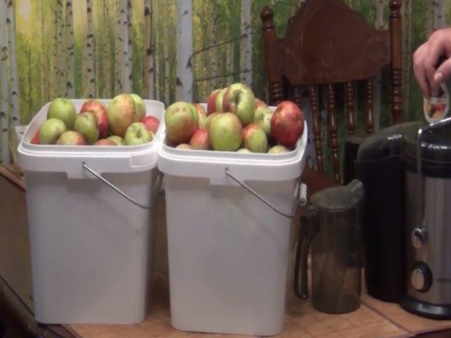 яблоки в вёдрах