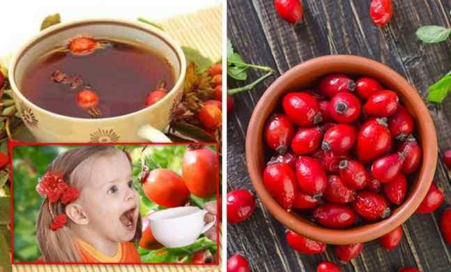 плоды шиповника - лечебные свойства