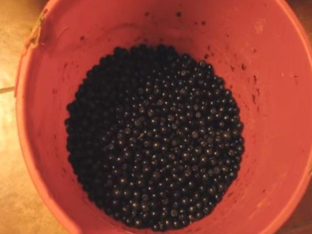 ягода в миске
