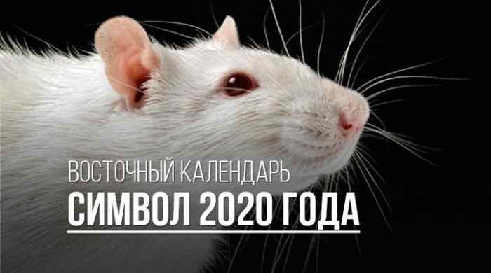 крыса символ года