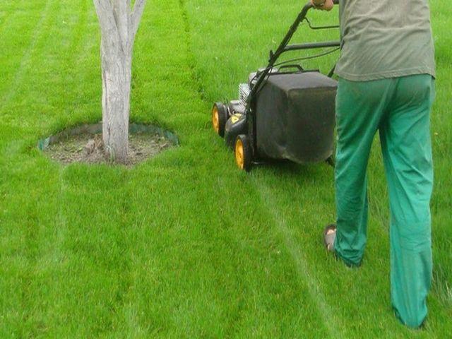стрижка газонной травы газонокосилкой