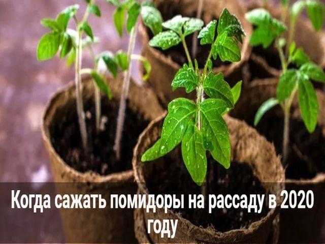 время садить рассаду помидор