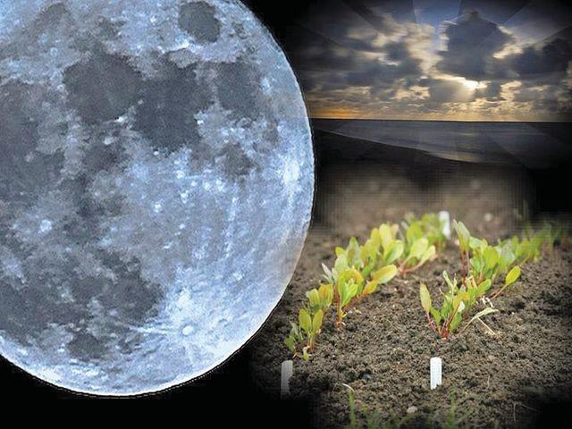 луна и растения