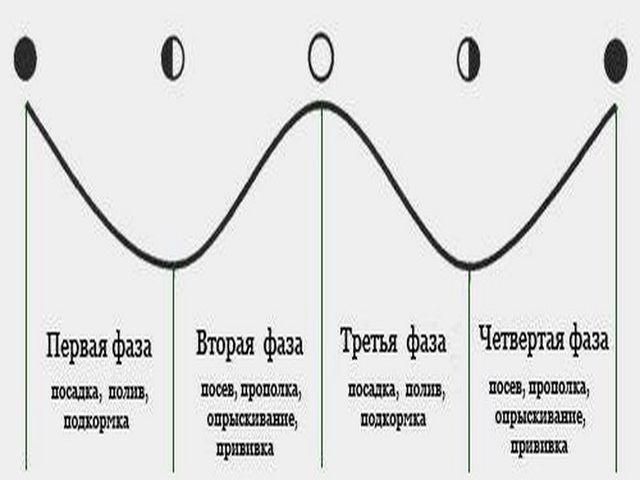 фазы луны и работы
