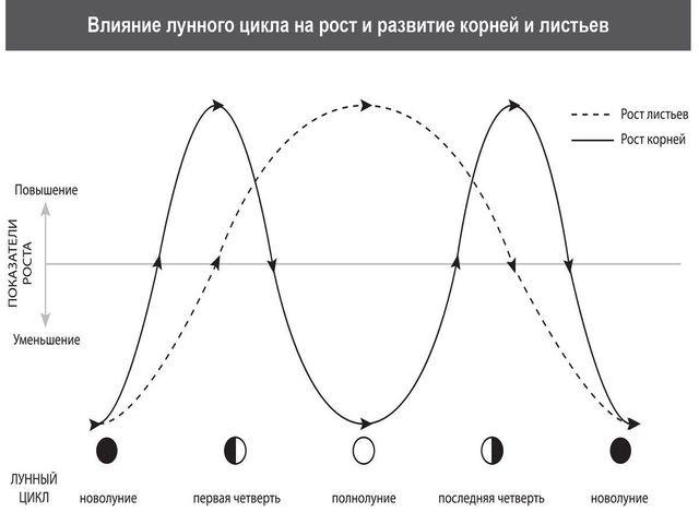 цикл фаз