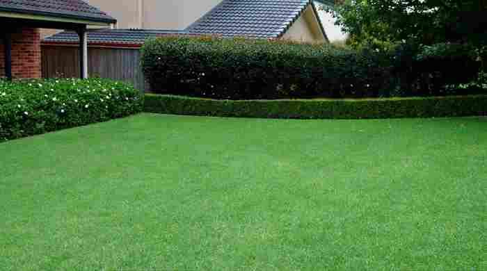 Посадка газонной травы и уход за ней
