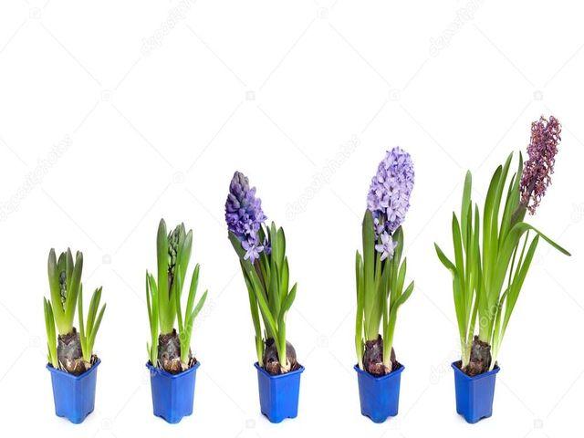 цветы в стаканчиках